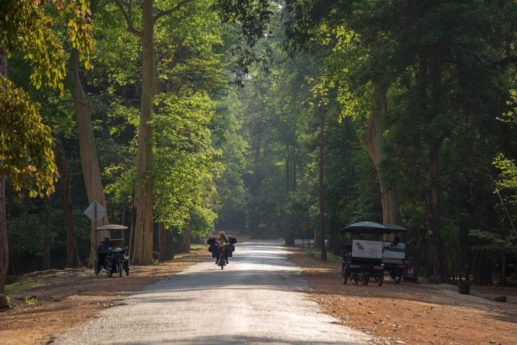 Forêt de Chi Pat