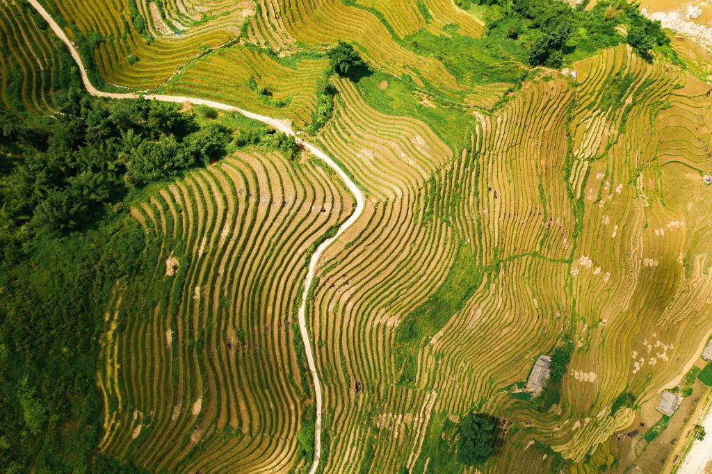 Vietnam - rizières de Sapa